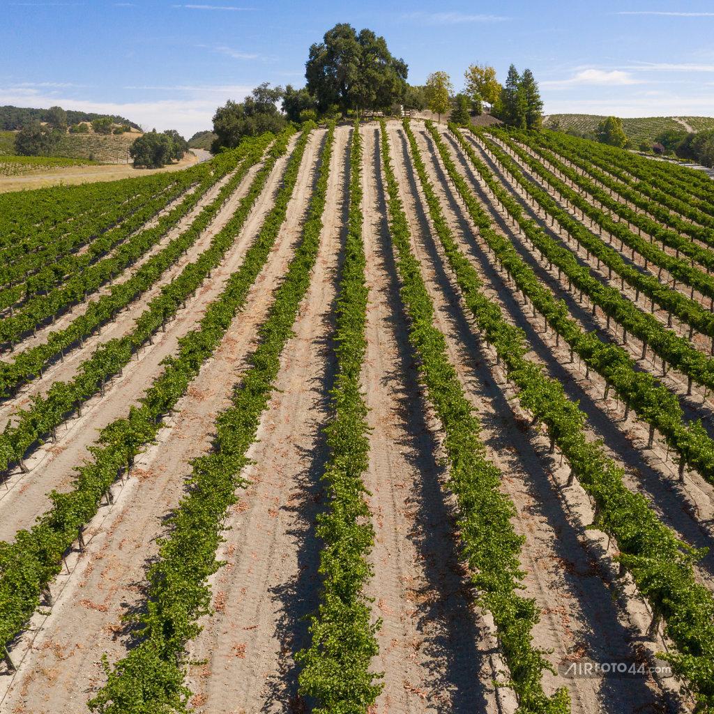 Wine-46-1808005-Pano.jpg